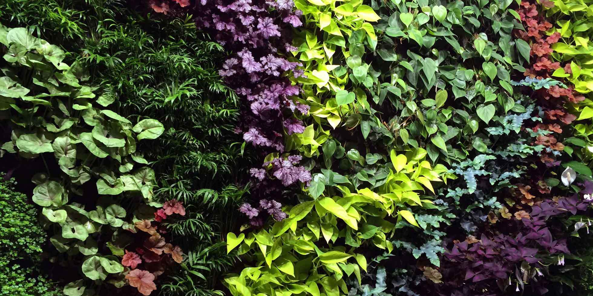 DPR Construction Living Wall by Habitat Horticulture - View 6