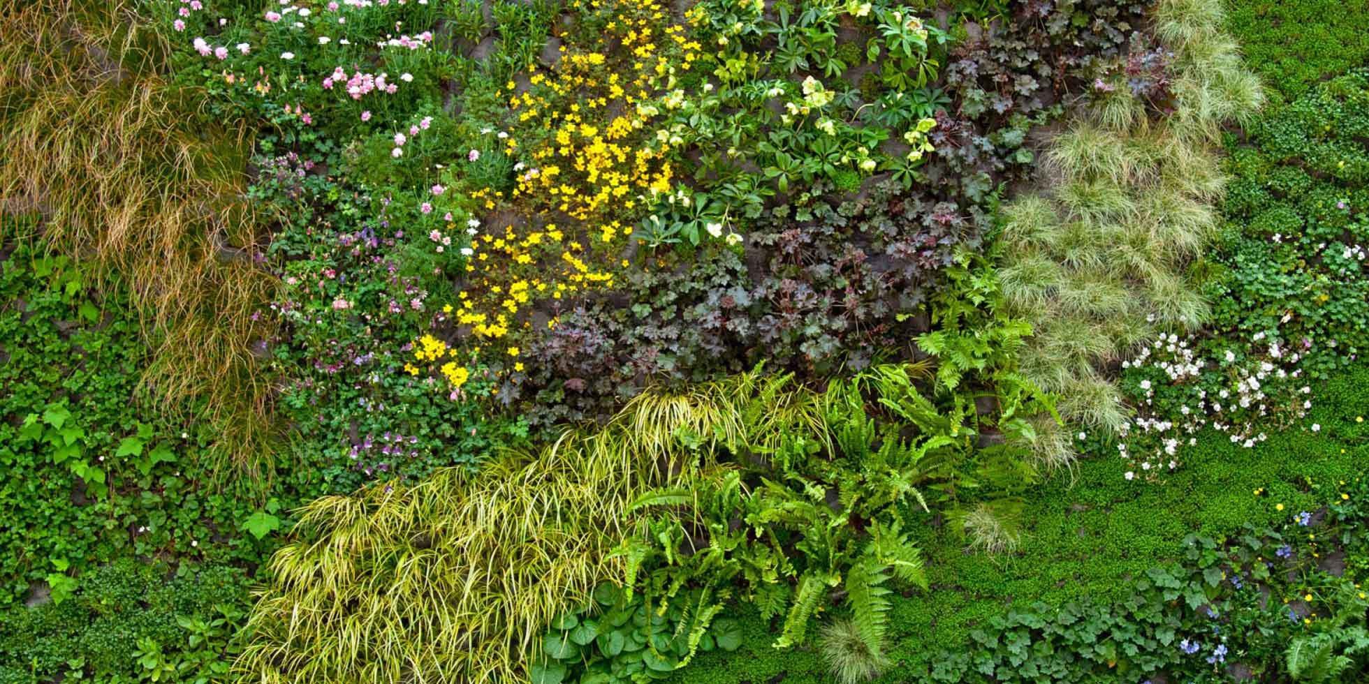 California Academy of Sciences Living Wall by Habitat Horticulture - View 4