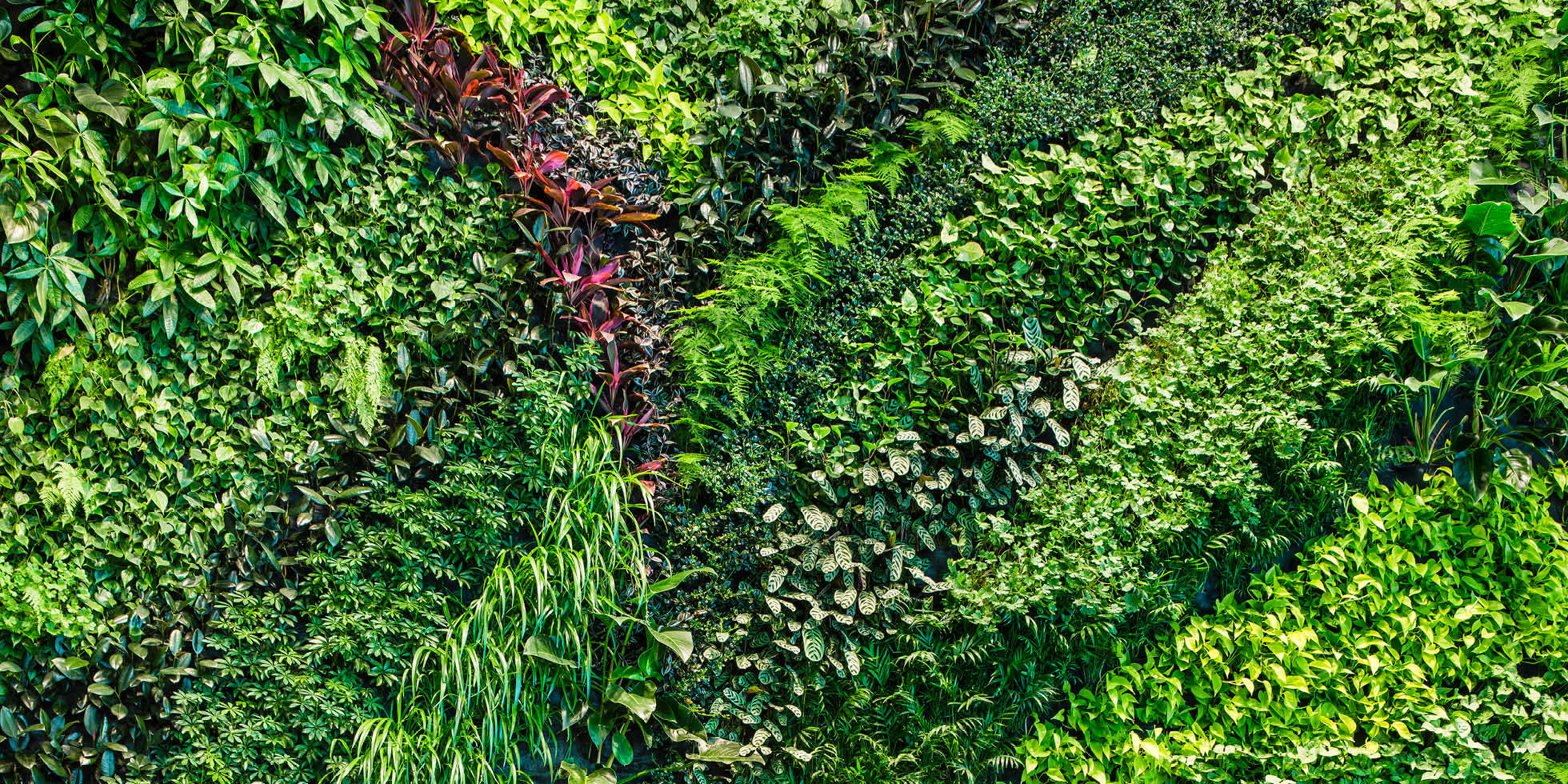 Foundry Square III Living Wall by Habitat Horticulture - View 3