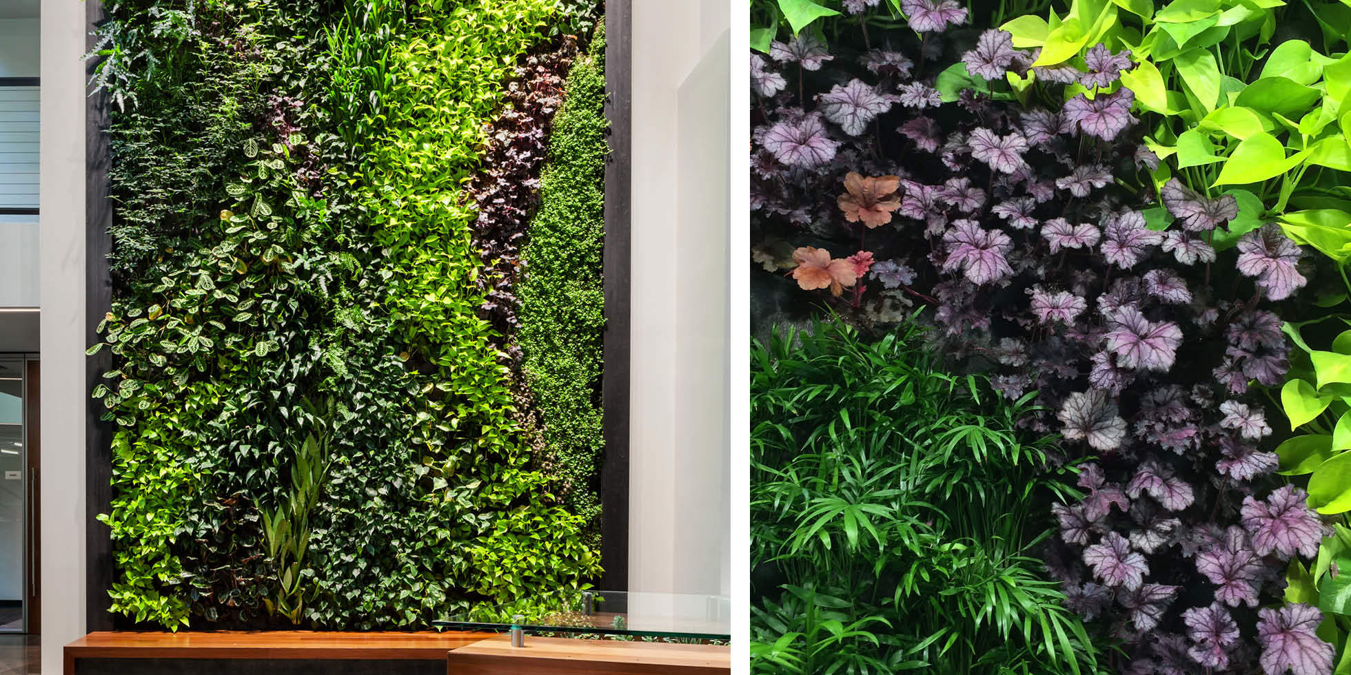 DPR Construction Living Wall by Habitat Horticulture - View 3