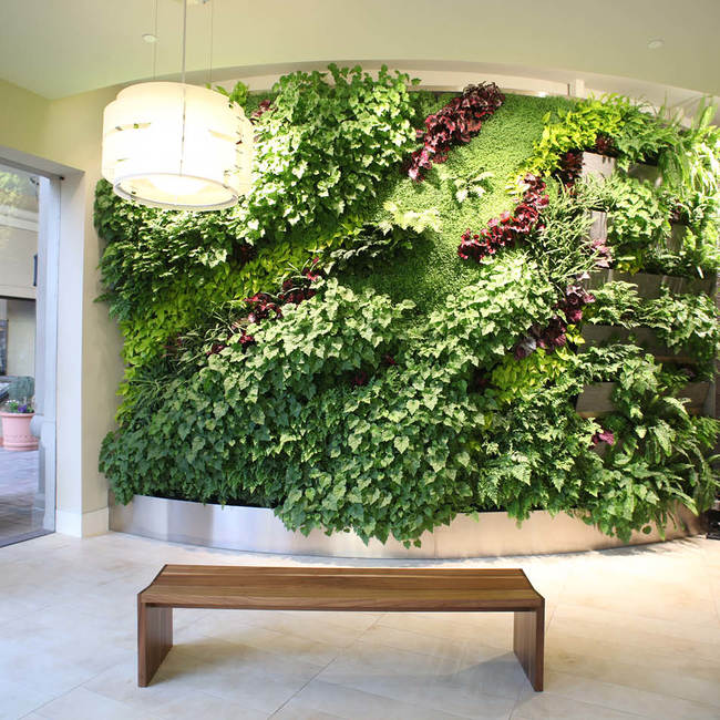 Corte madera living wall green wall 2