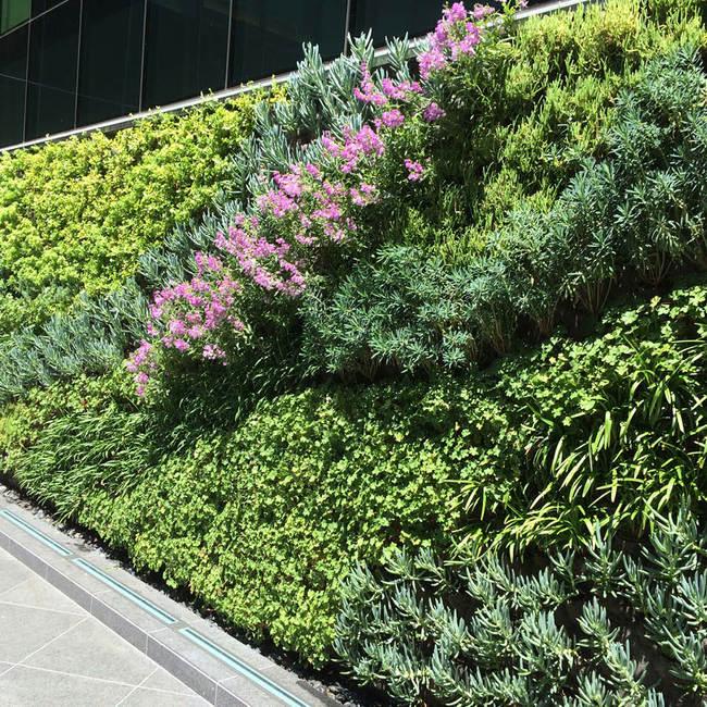 Kennedy wilson living wall vertical garden2