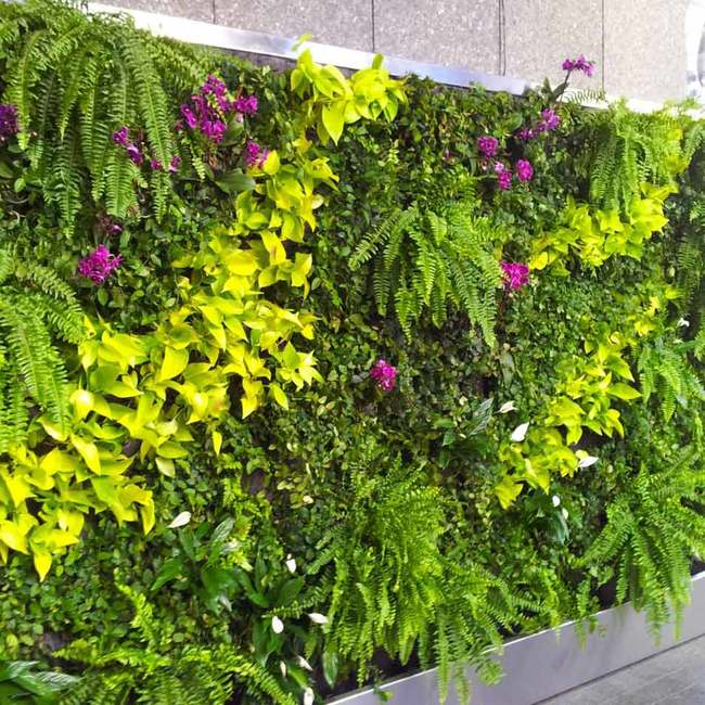 Mckesson living wall square