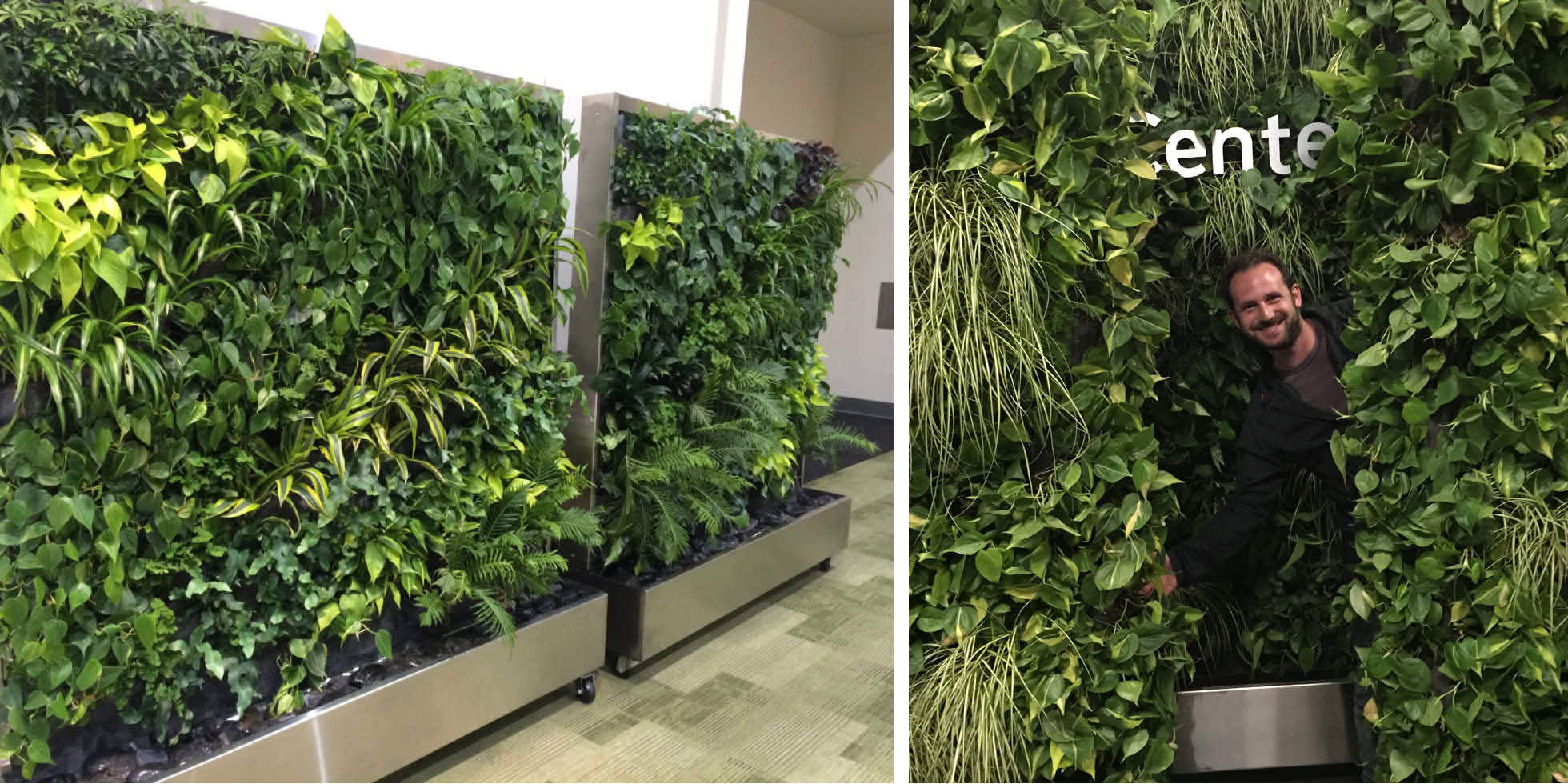 Dreamforce Living Partitions Living Wall by Habitat Horticulture - View 1