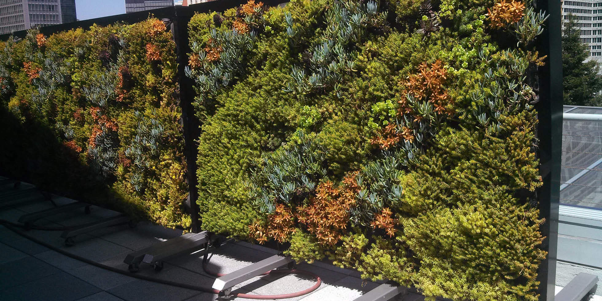 Metreon City View Living Wall by Habitat Horticulture - View 2