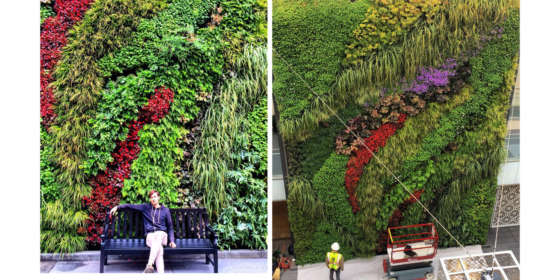 Westfield Century City Living Wall by Habitat Horticulture - View 1