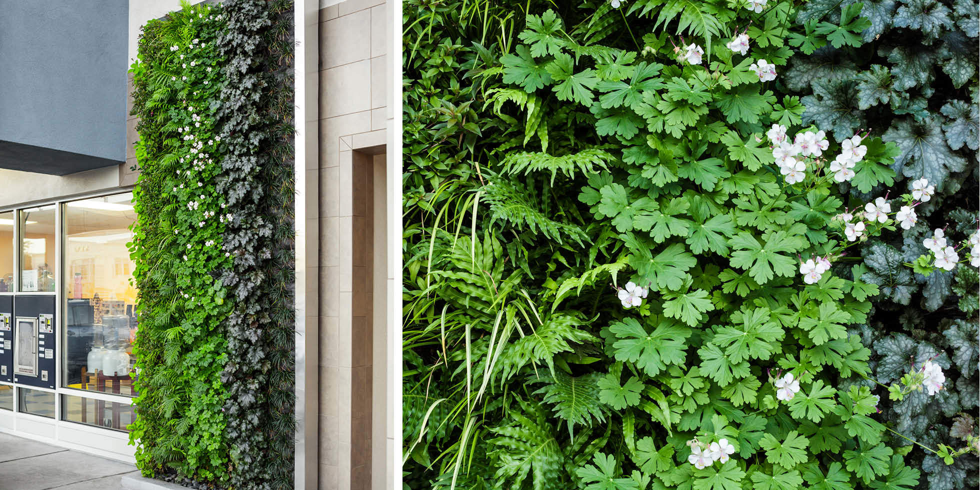 City Sports Club Living Wall by Habitat Horticulture - View 3