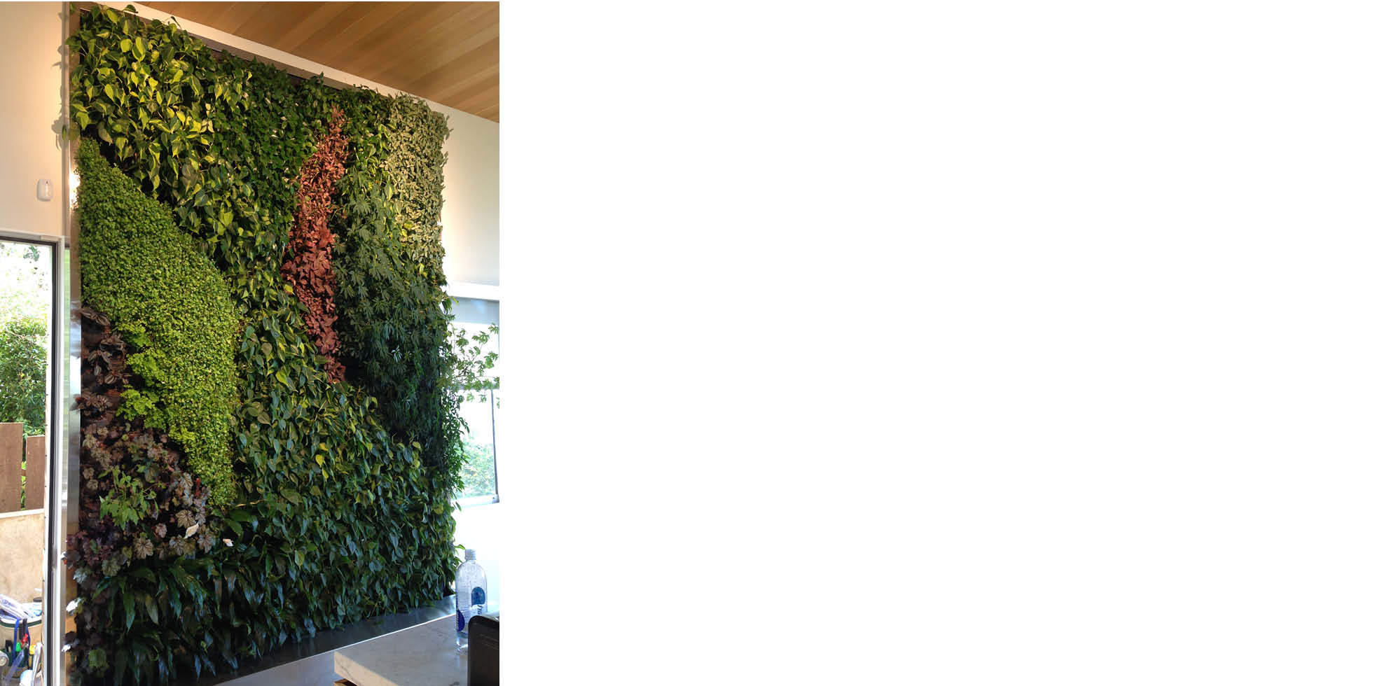 Duncan Street Living Wall by Habitat Horticulture - View 2