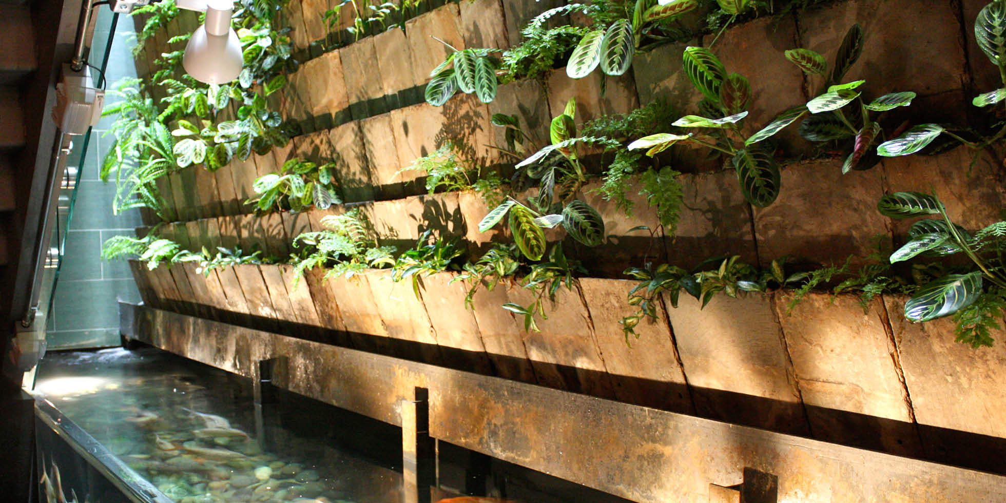 The Moss Room Restaurant Living Wall by Habitat Horticulture - View 3