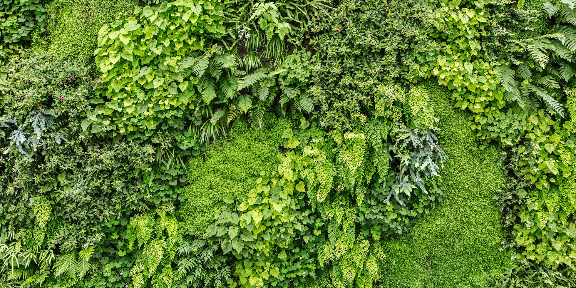 SFMOMA Living Wall by Habitat Horticulture - View 8