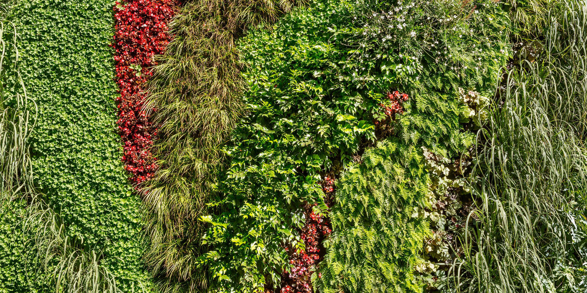 Westfield Century City Living Wall by Habitat Horticulture - View 5
