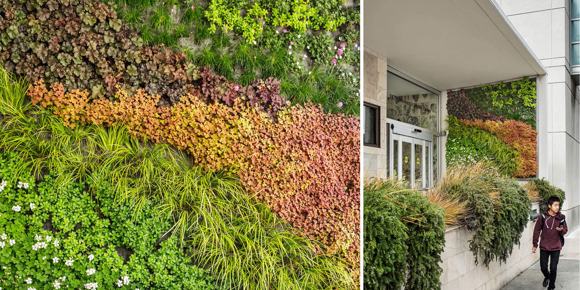 UCSF Women's Health Center Living Wall by Habitat Horticulture - View 3