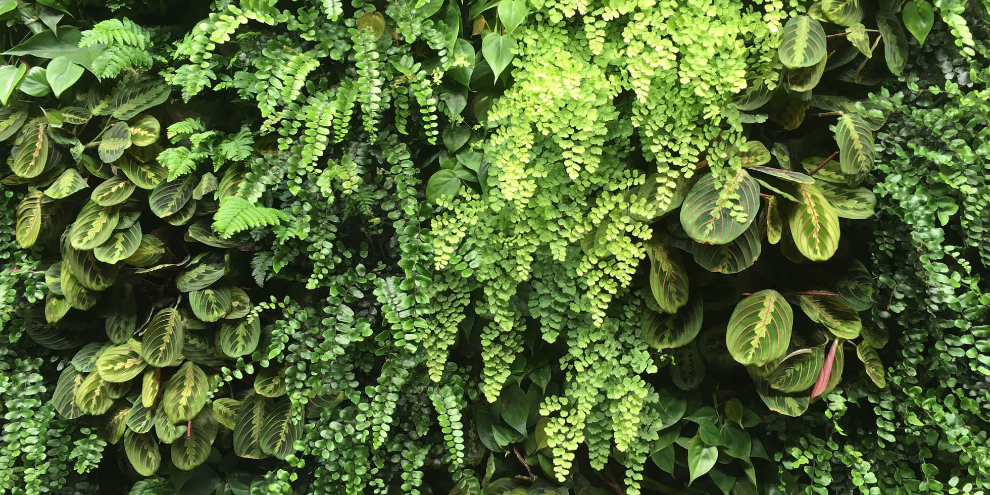 Arch|Nexus Living Wall by Habitat Horticulture - View 3