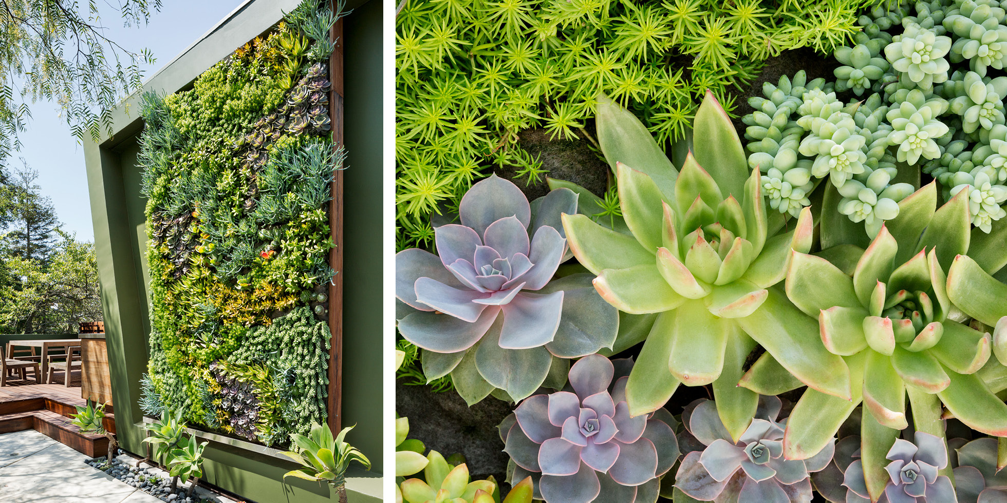 Private Residence Living Wall by Habitat Horticulture - View 3