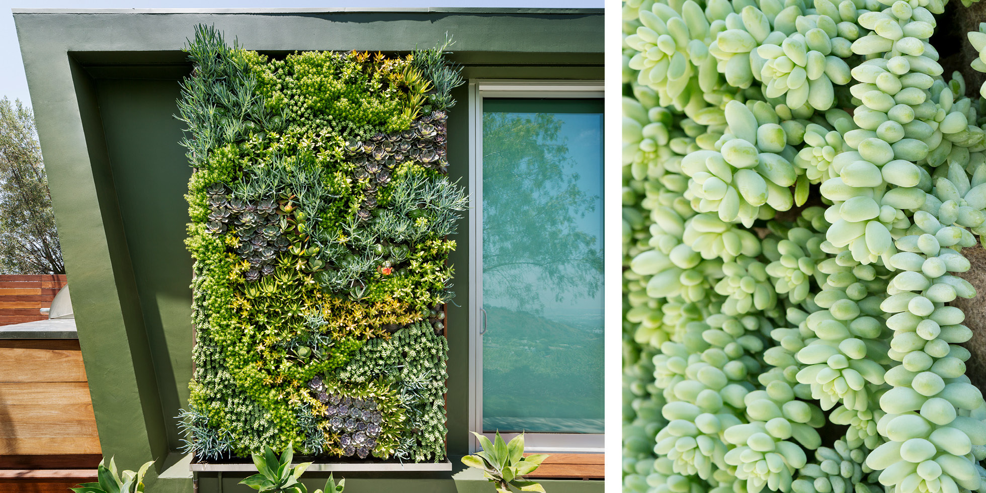 Private Residence Living Wall by Habitat Horticulture - View 1