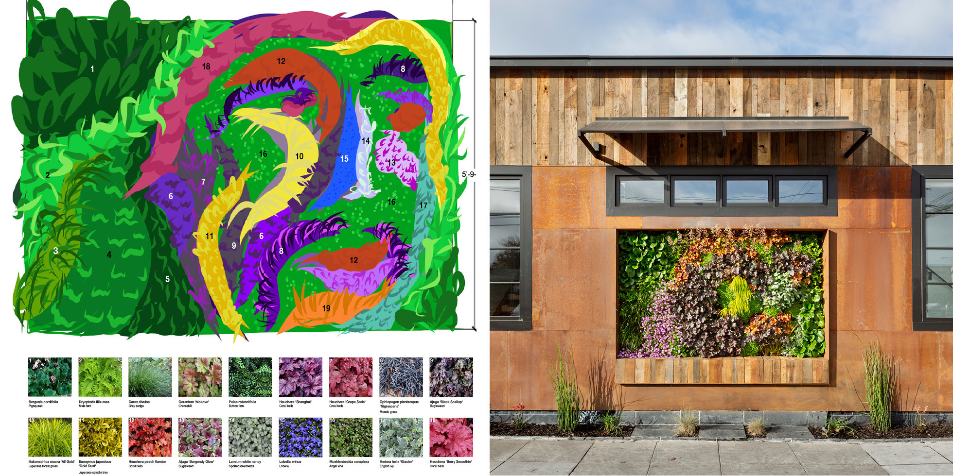 Redwood City Residence Living Wall by Habitat Horticulture - View 5