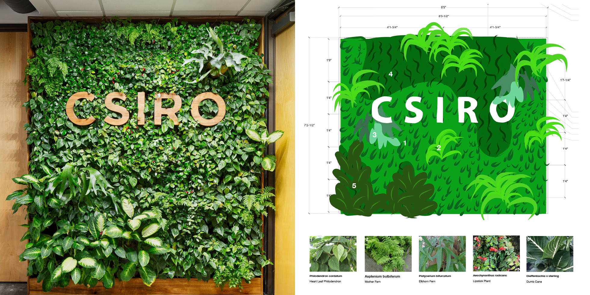CSIRO Living Wall by Habitat Horticulture - View 4