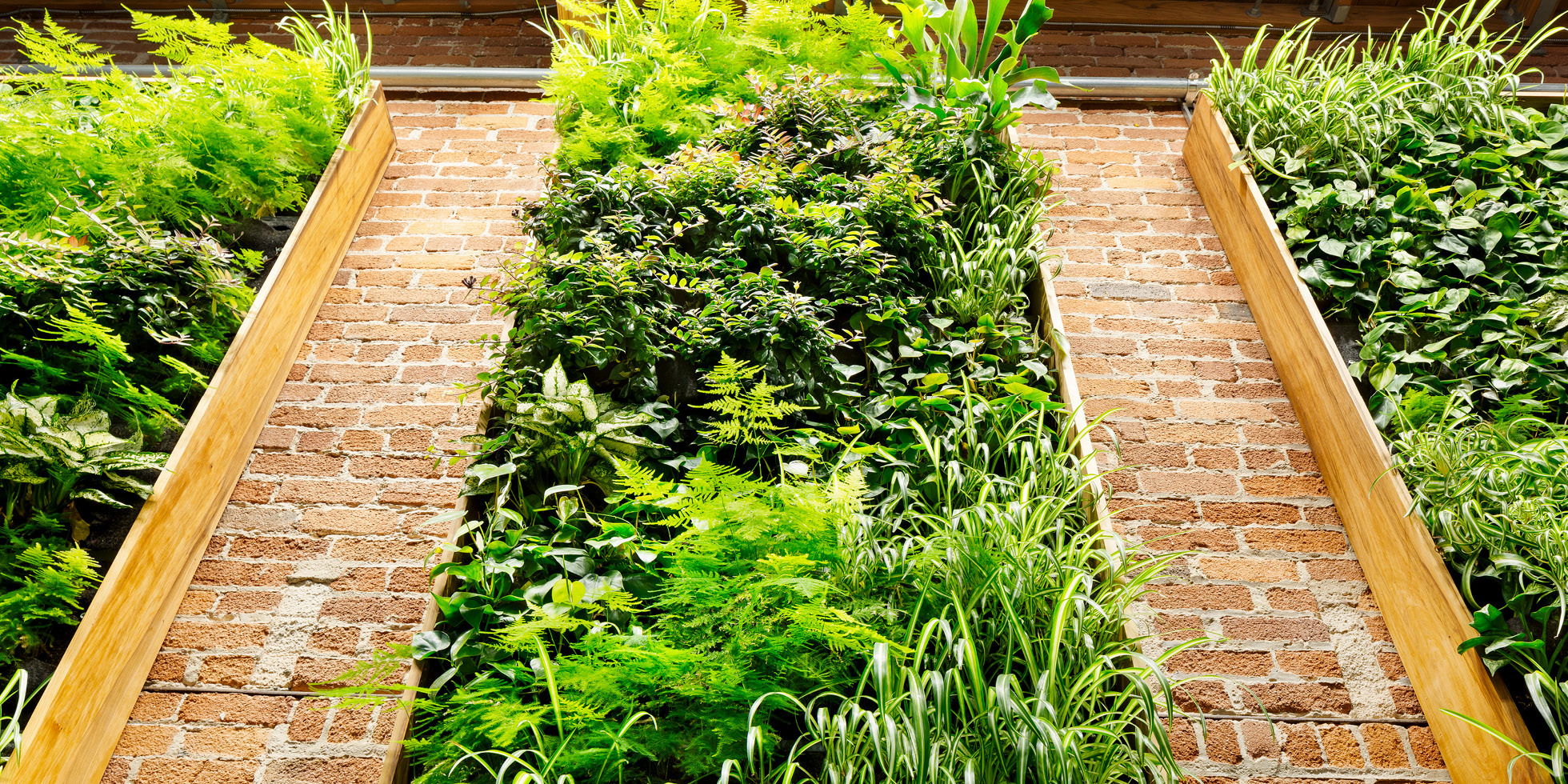 Combine Studios Living Wall by Habitat Horticulture - View 3