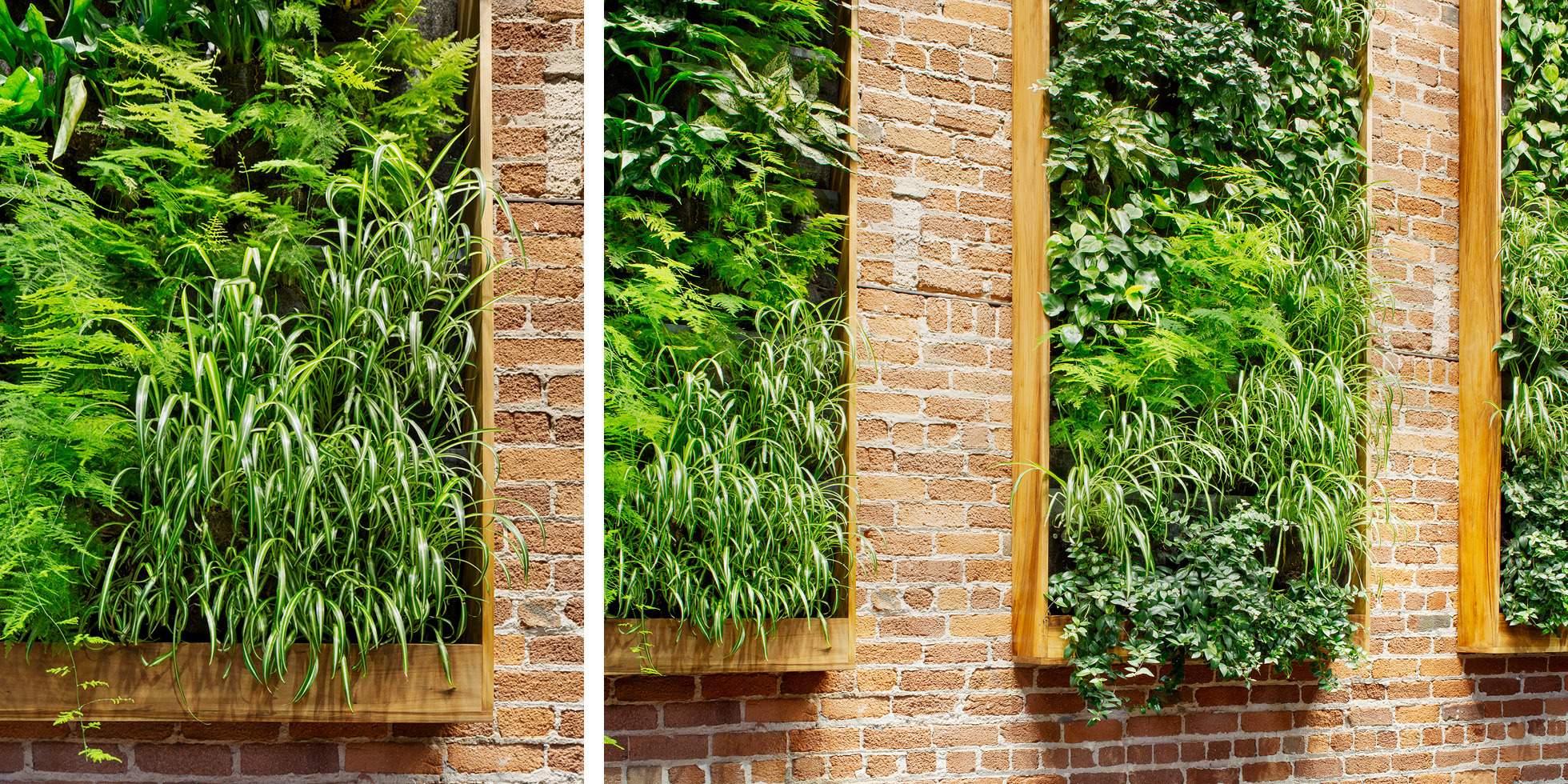 Combine Studios Living Wall by Habitat Horticulture - View 4
