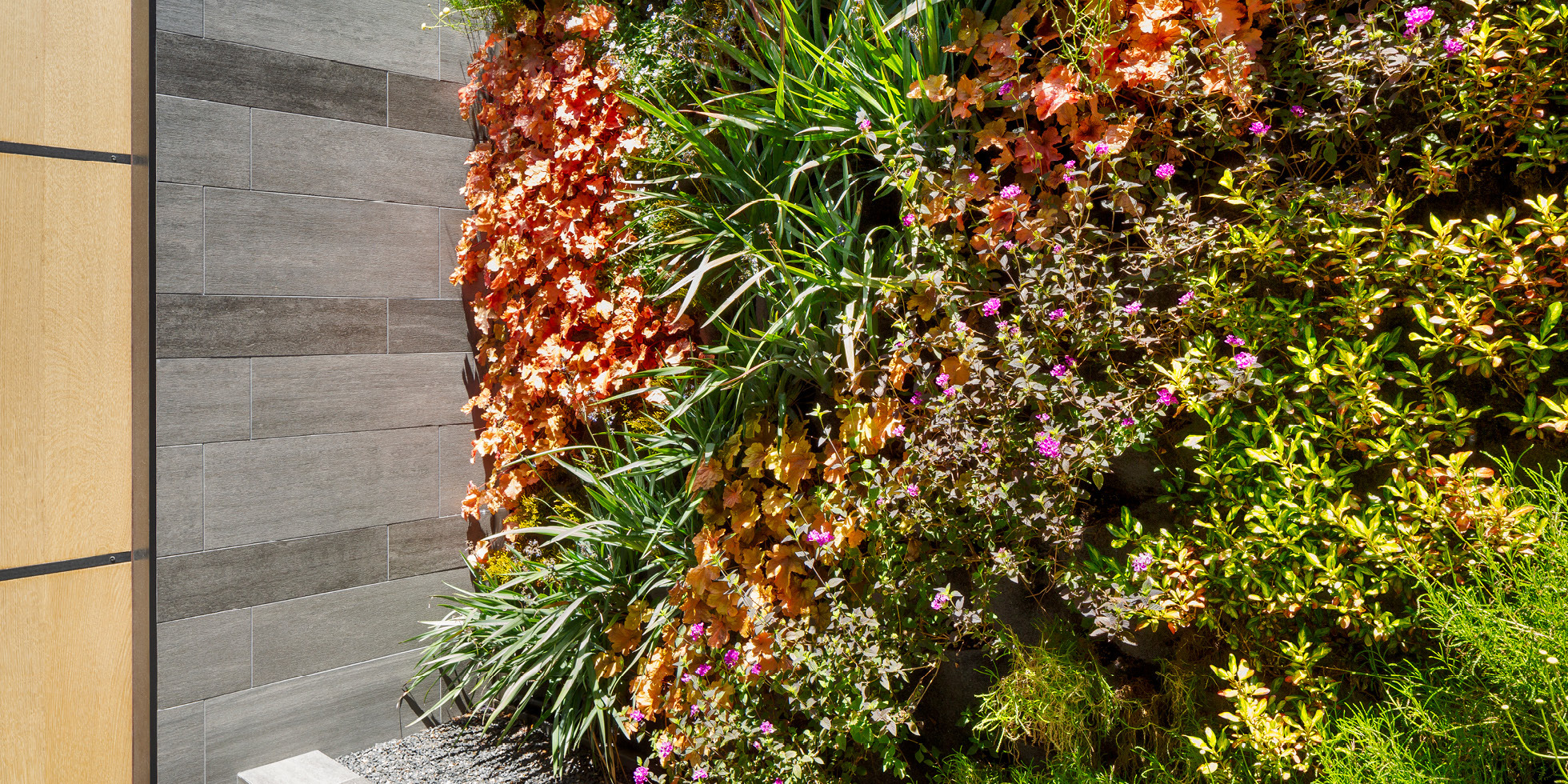 San Francisco Residence Living Wall by Habitat Horticulture - View 3