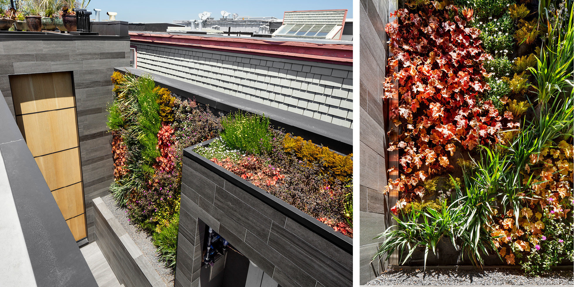 San Francisco Residence Living Wall by Habitat Horticulture - View 4