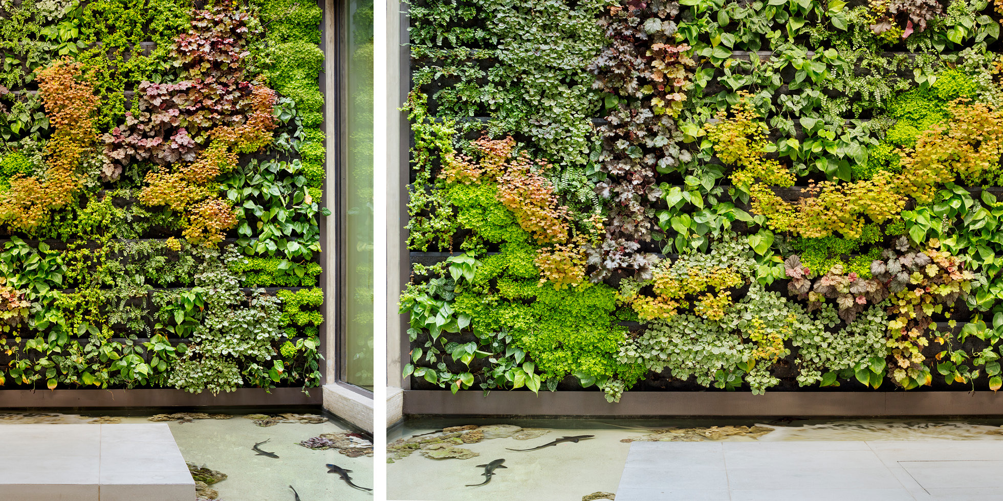 Beverly Hills Residence Living Wall by Habitat Horticulture - View 2