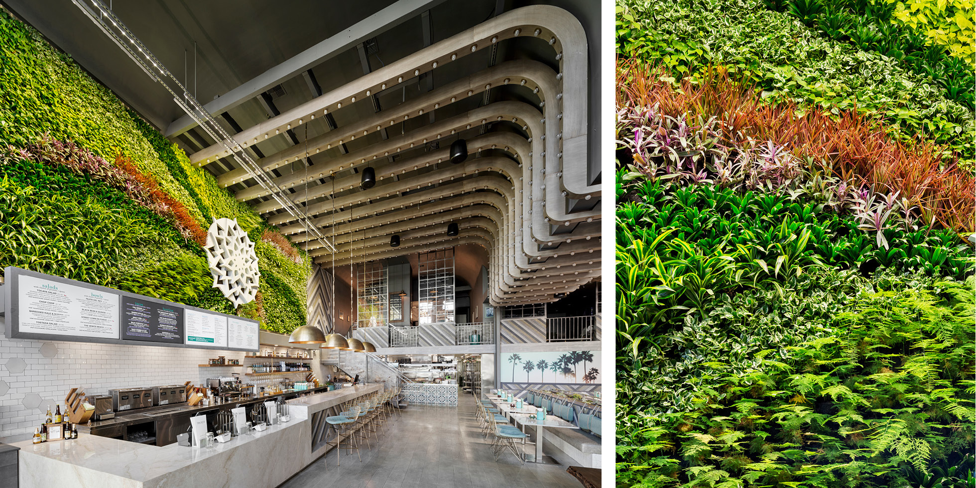 Tocaya Organica Living Wall by Habitat Horticulture - View 3