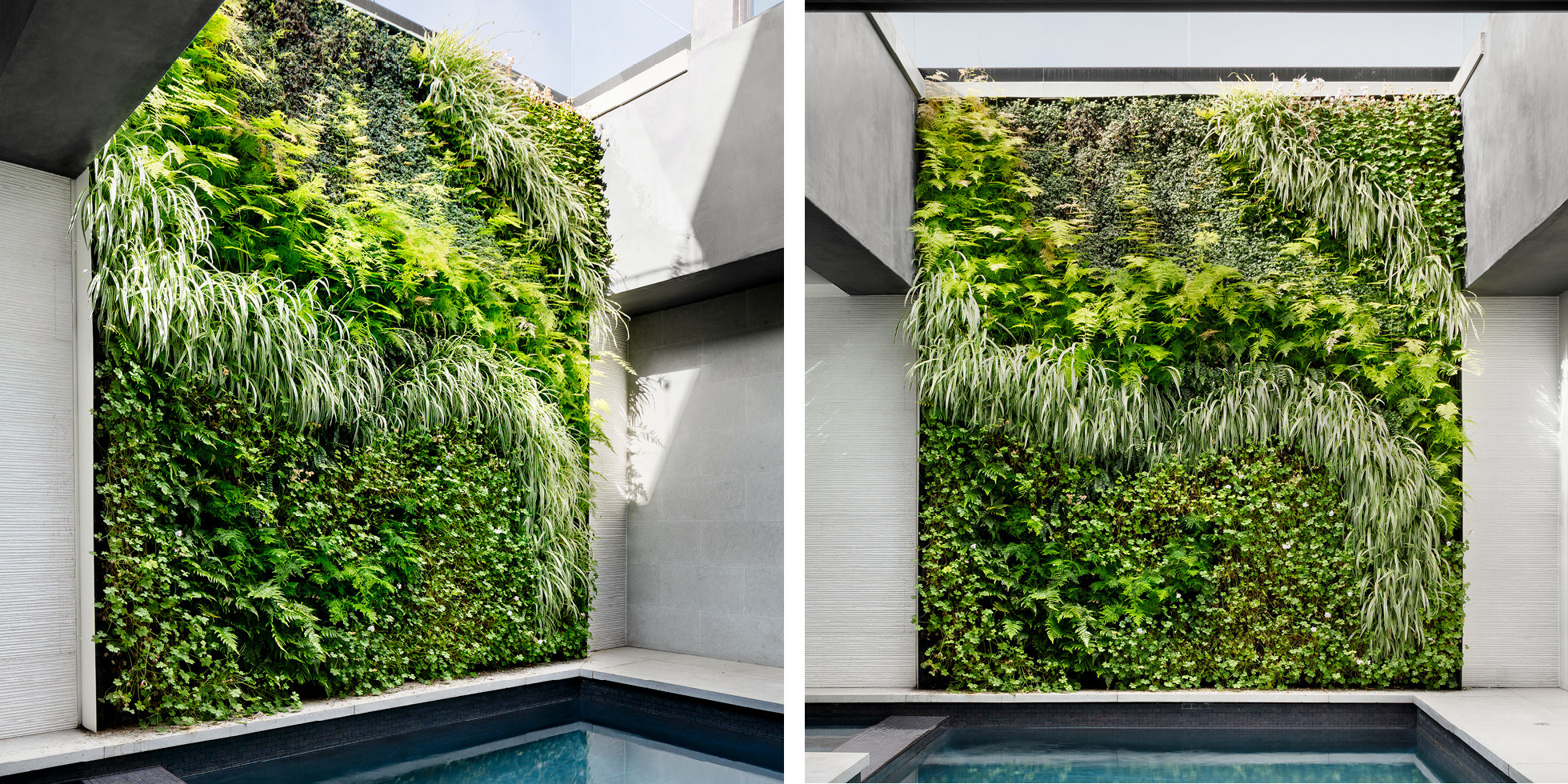Hollywood Hills Poolside Retreat Living Wall by Habitat Horticulture - View 2