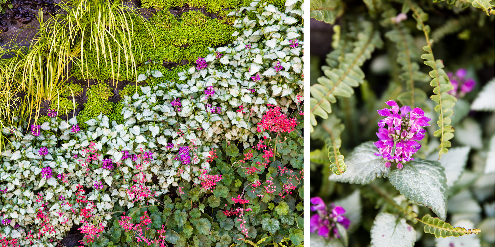 Bay Meadows Welcome Center Living Wall by Habitat Horticulture - View 4