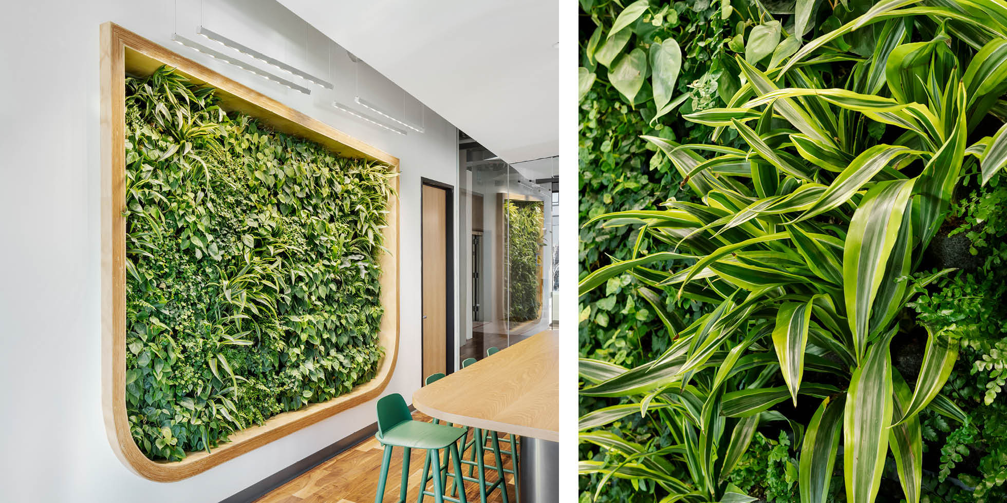 Webcor  Living Wall by Habitat Horticulture - View 2