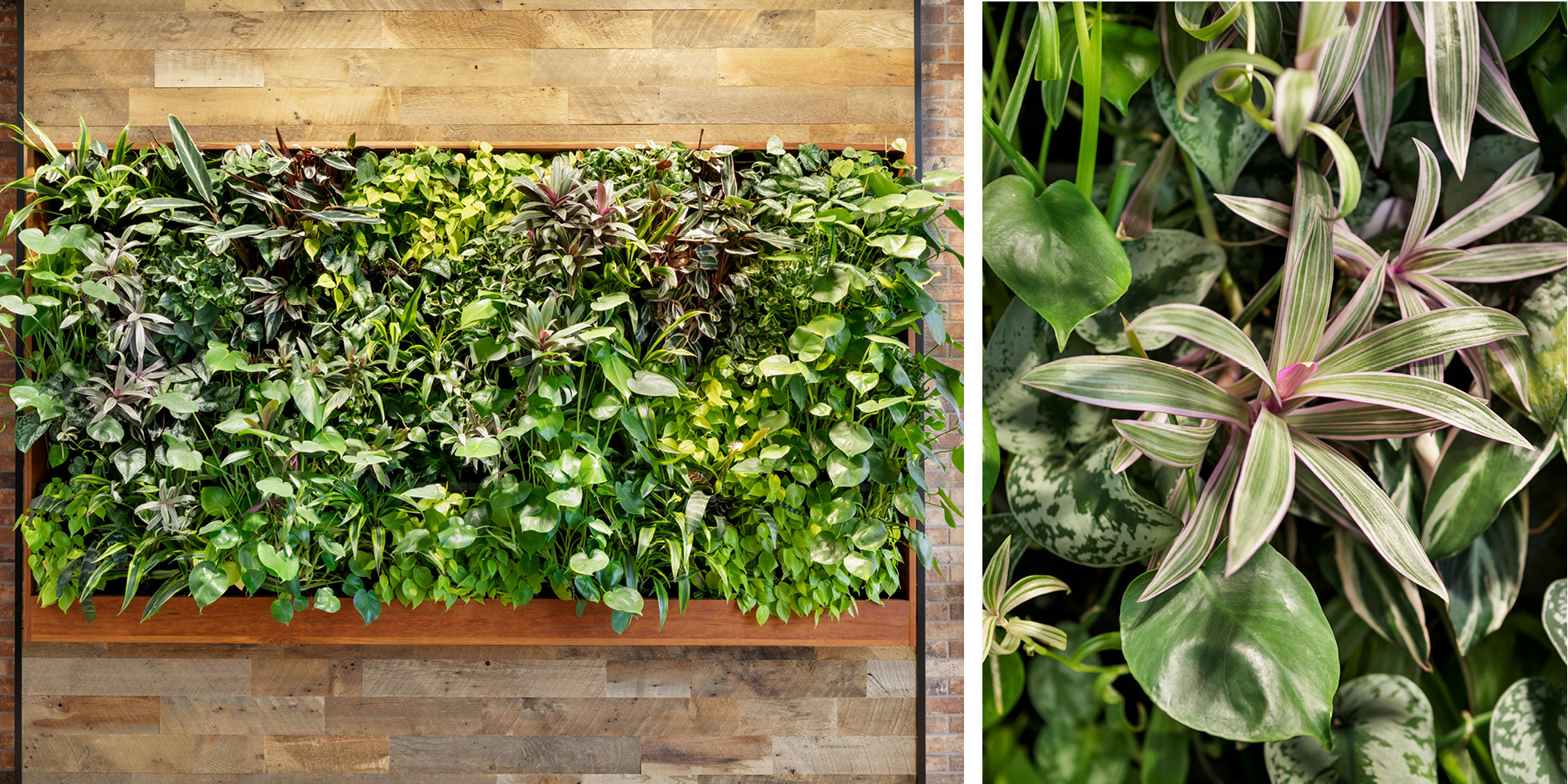 Smiths Group Service Corp Living Wall by Habitat Horticulture - View 4