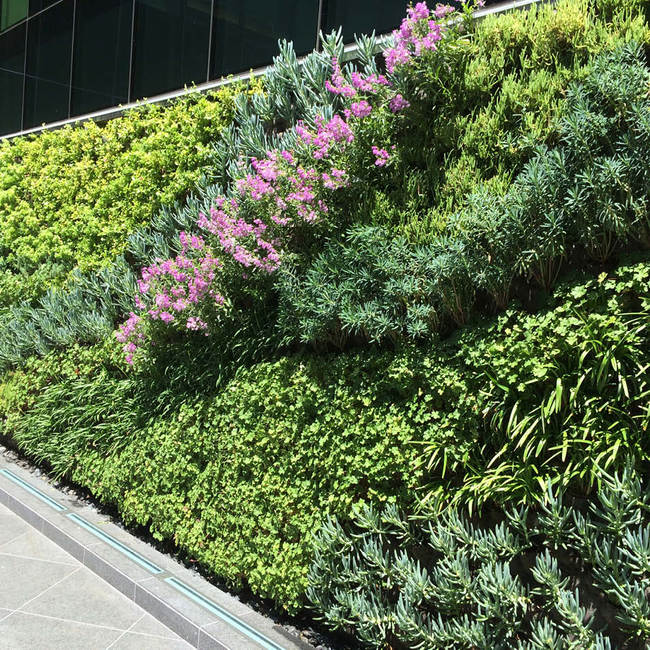 Kennedy wilson living wall vertical garden2
