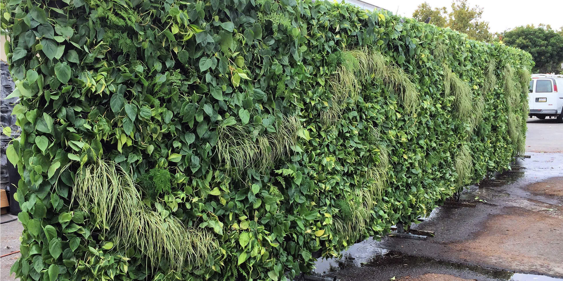 Dreamforce Living Partitions Living Wall by Habitat Horticulture - View 4