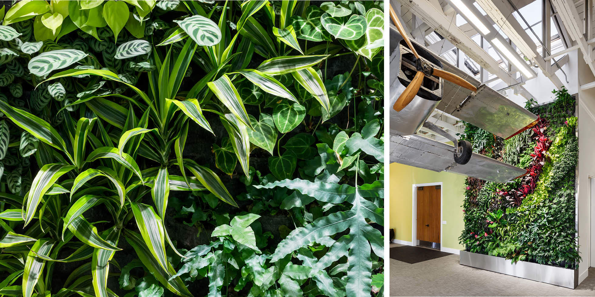 Dailymotion Living Wall by Habitat Horticulture - View 2