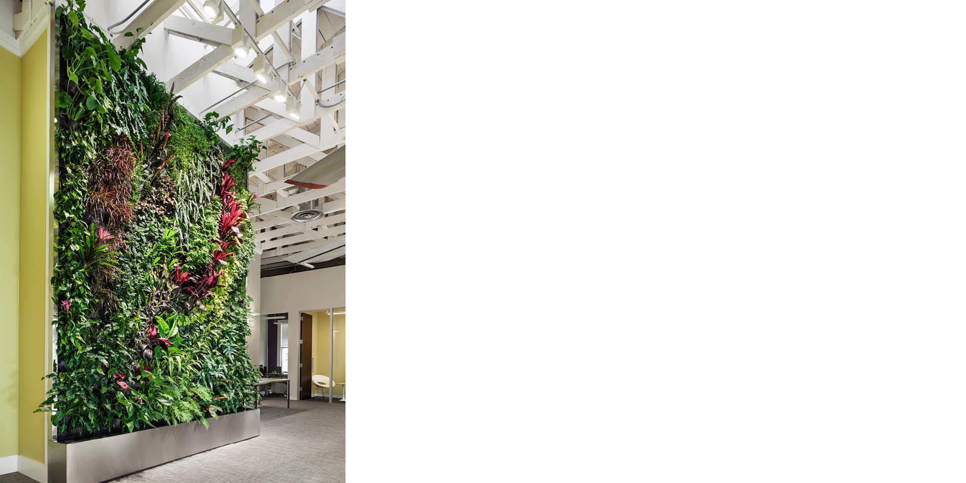 Dailymotion Living Wall by Habitat Horticulture - View 3