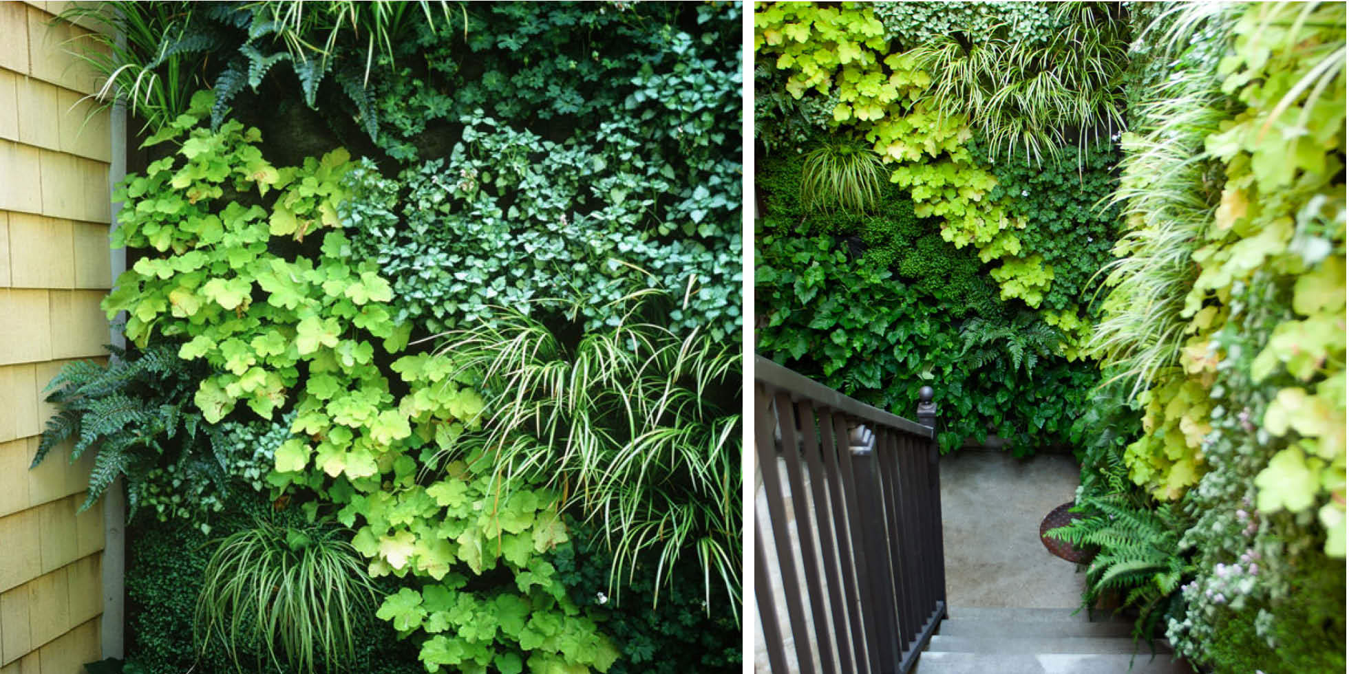Los Altos Stairwell Living Wall by Habitat Horticulture - View 4