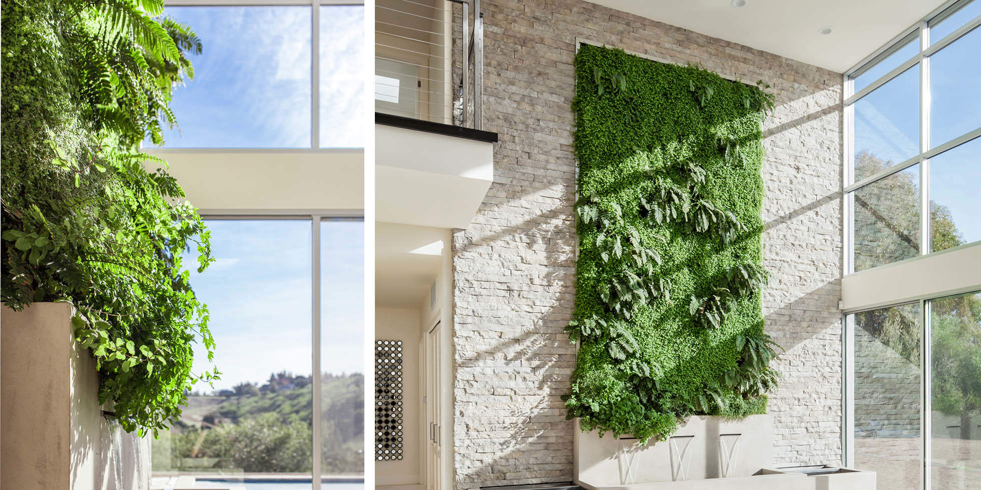 Liddicoat Residence Living Wall by Habitat Horticulture - View 4