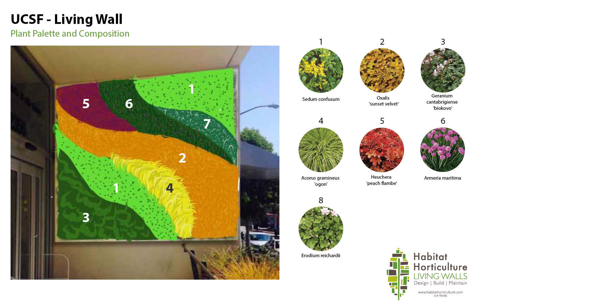 UCSF Women's Health Center Living Wall by Habitat Horticulture - View 4
