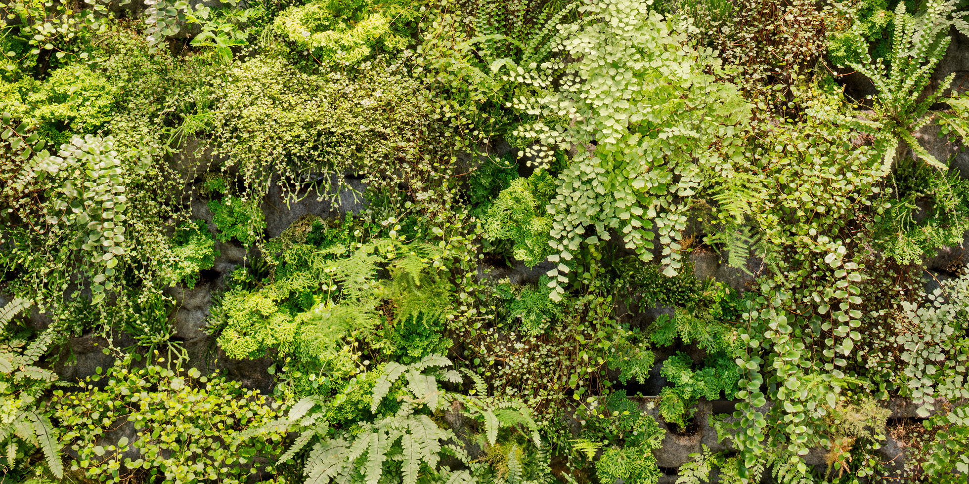 One Workplace Living Wall by Habitat Horticulture - View 3