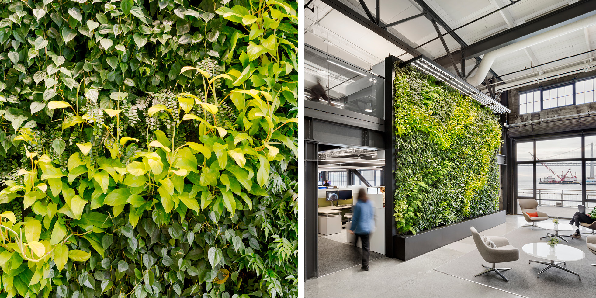 Prologis Living Wall by Habitat Horticulture - View 3