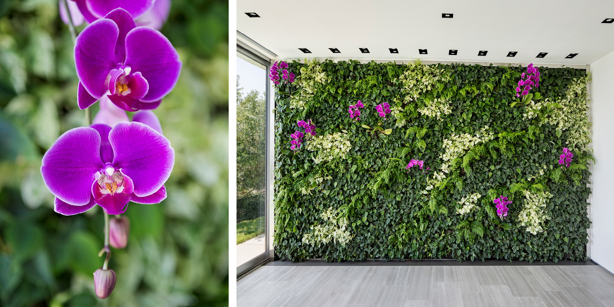 Skyline Residence Living Wall by Habitat Horticulture - View 4