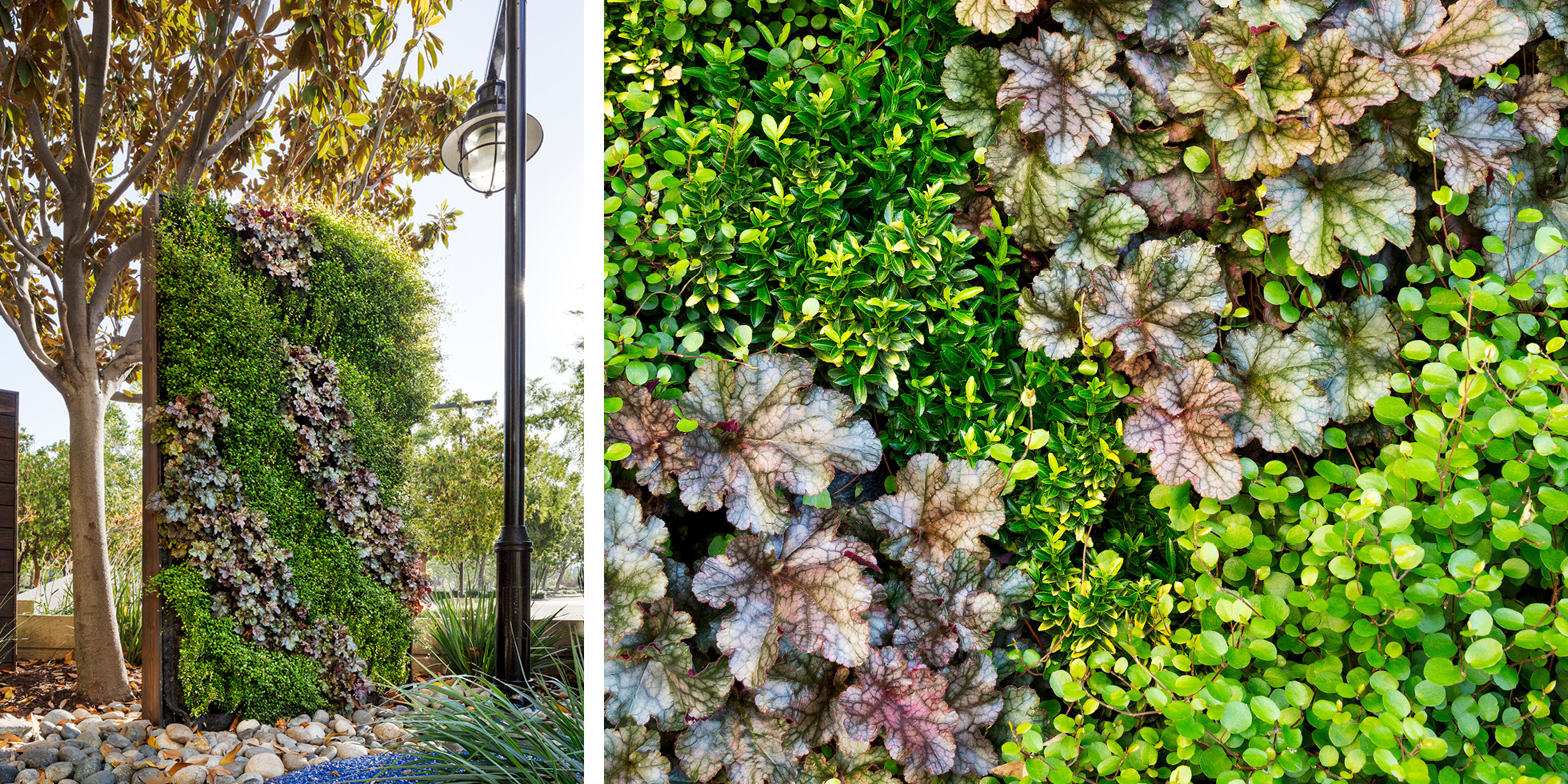 Cisco Reflection Garden Living Wall by Habitat Horticulture - View 4