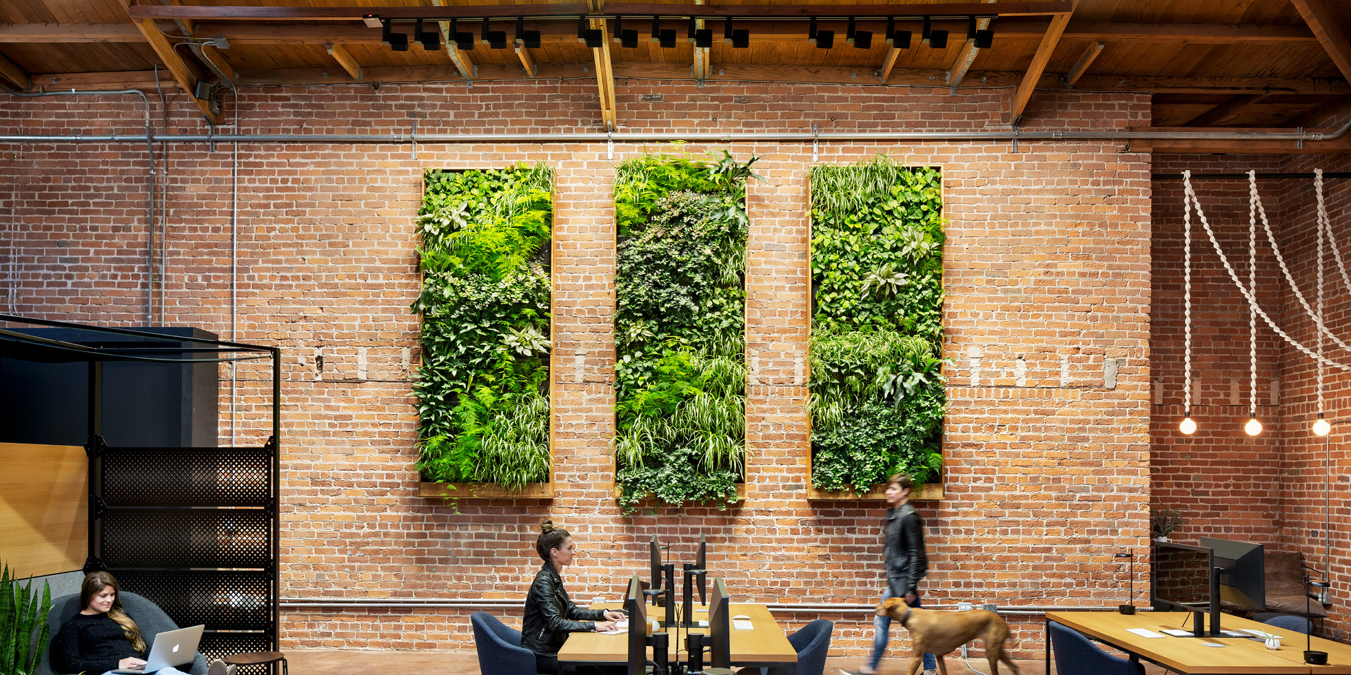 Combine Studios Living Wall by Habitat Horticulture - View 1