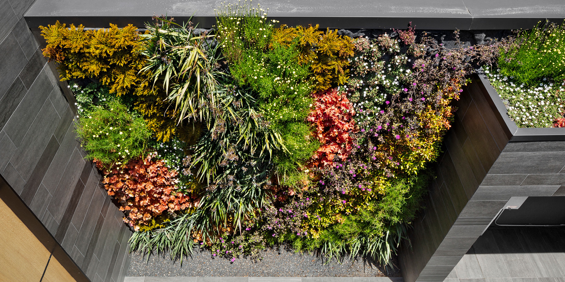 San Francisco Residence Living Wall by Habitat Horticulture - View 2