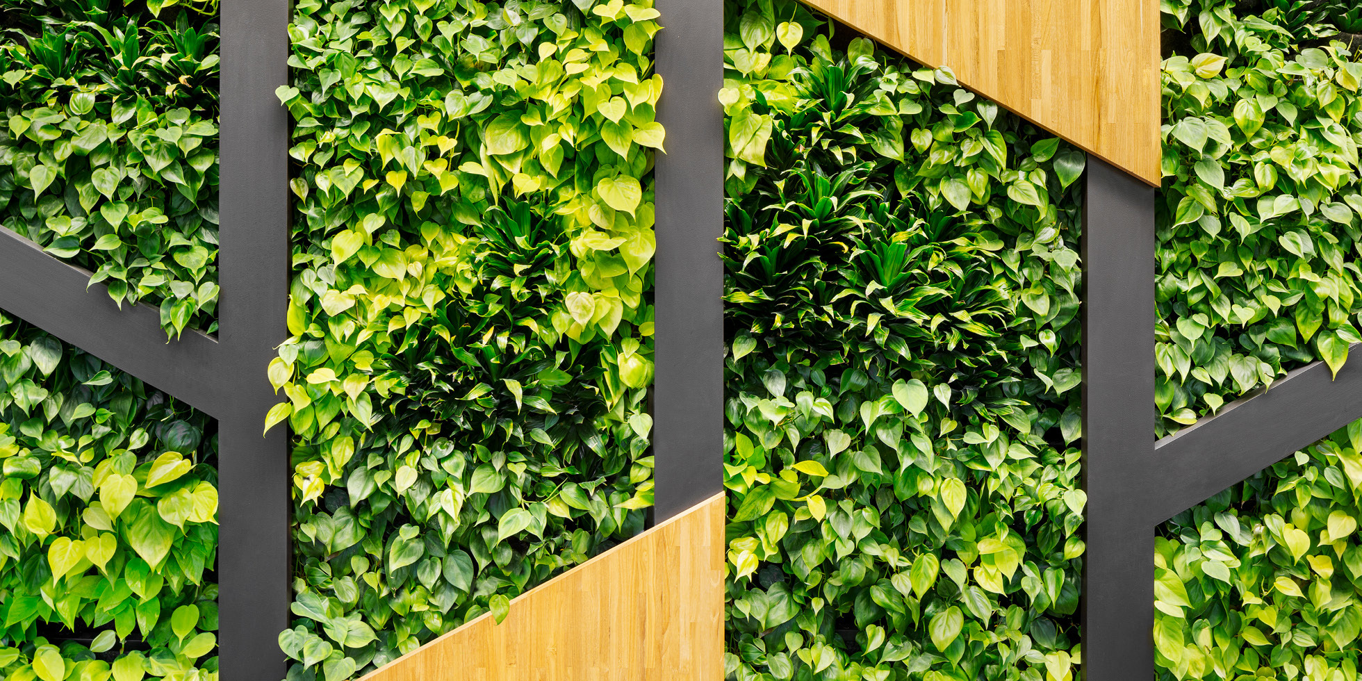 Symantec Living Wall by Habitat Horticulture - View 3