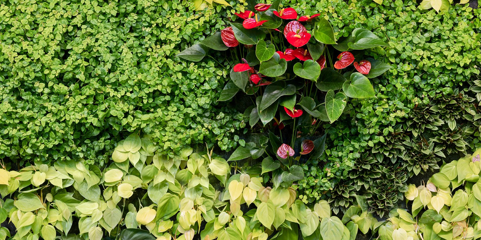 Tencent America Living Wall by Habitat Horticulture - View 4