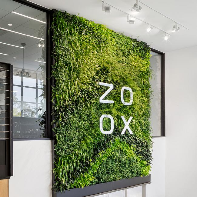 Zoox6