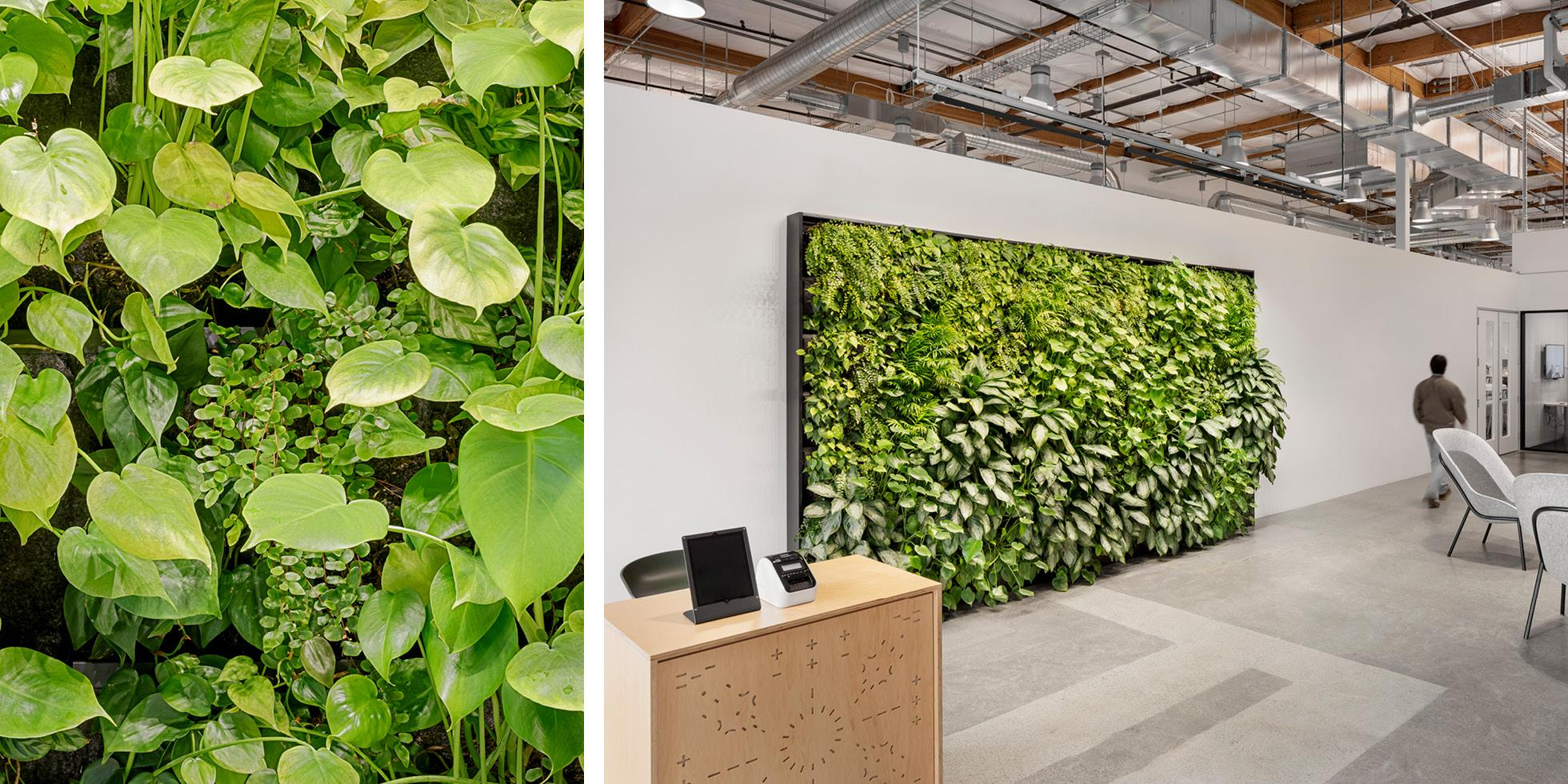 Zoox Living Wall by Habitat Horticulture - View 5